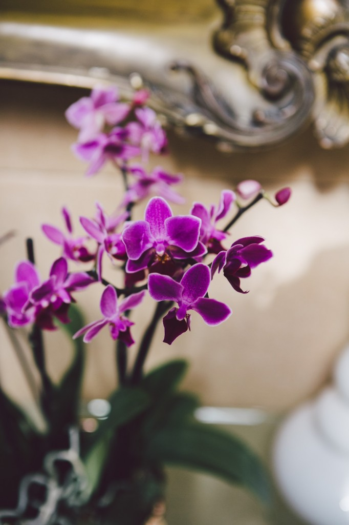 noce d'orchidee mariage